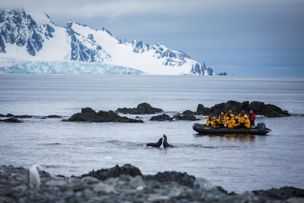 team of researchers in a boat on the right side of image to group of seals in Arctic waters