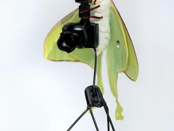 a luna moth shown cradling a tiny camera setup in Virginia Lee Montgonmery solo exhibition installation video titled BUTTERFLY BIRTH BED at Hesse Flatow gallery in New York