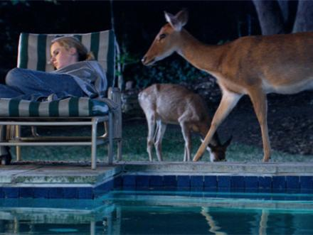 Single-channel video color still of sleeping woman next to pool with roaming deer nearby