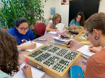 image of Studio Art and Art Education students drawing insect specimens at UT's world class Biodiversity Center