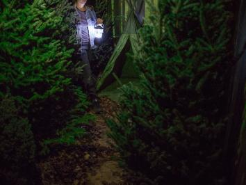 image of a woman traveling through an indoor forest
