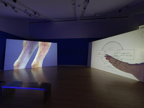installation image of multi channel video from artist Erin Johnson