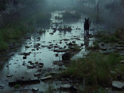 film still from movie stalker involving a wolf standing in silhouette in a green tinted swamp