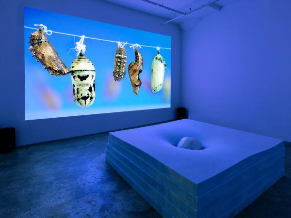 Installation Image from University of Texas at Austin Studio Art alumna and graphic facilitator Virginia Lee Montgomery Solo Exhibition Dream Cocoon featuring projection of a moth cocoon in a room bathed in blue light